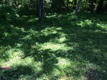 140614森の下草刈り.jpg
