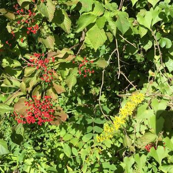 140928_木の実と花.jpg