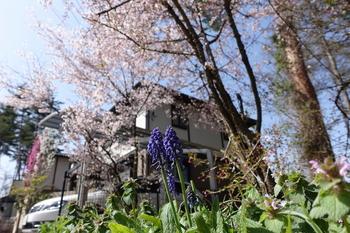 150418_自宅の春.JPG